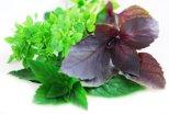 Зелень для мужского здоровья