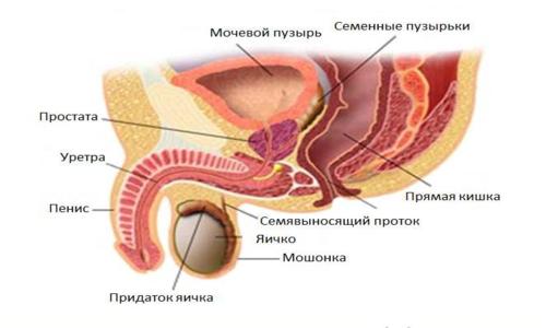 Рак простаты с прорастанием в мочевой пузырь
