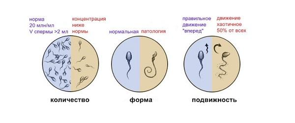 Морфологические показатели