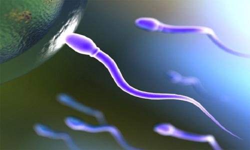 Uvelichit' kolichestvo spermy